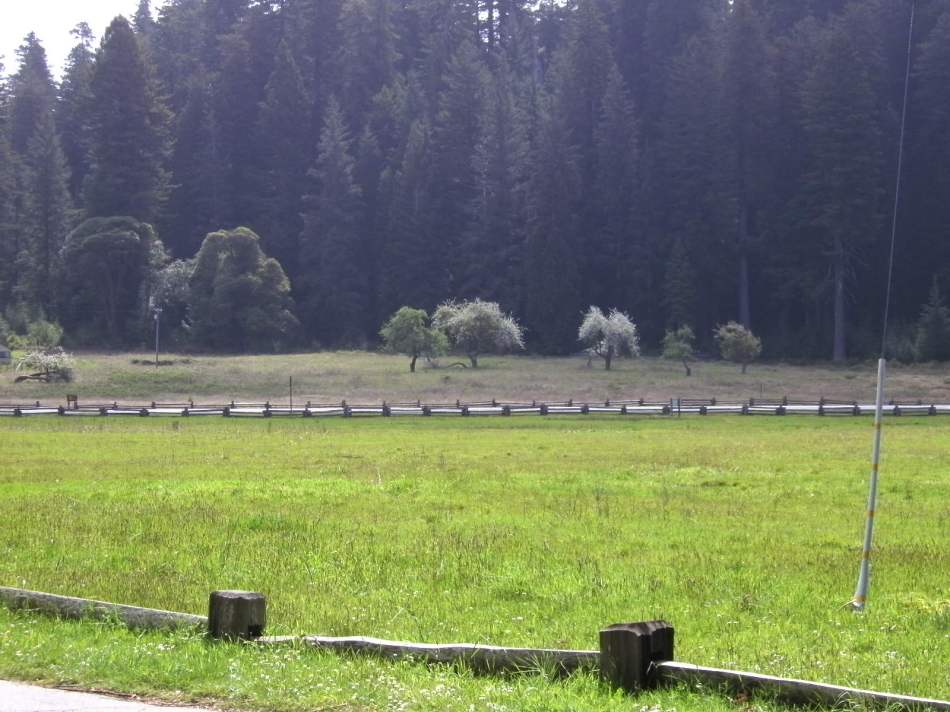 ELK MEADOW