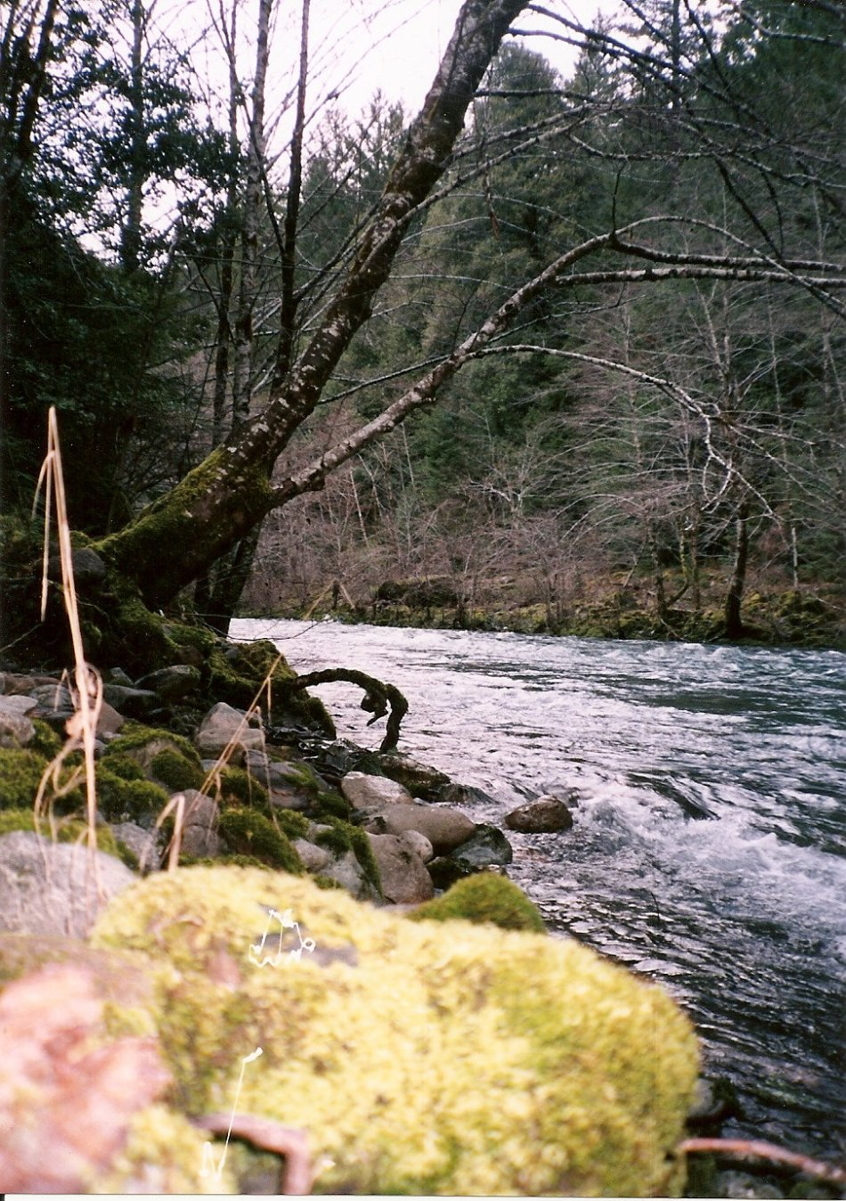 STRANGE LIGHT IN THE GREEN MOSS BY THE SMITH RIVER (FILM)