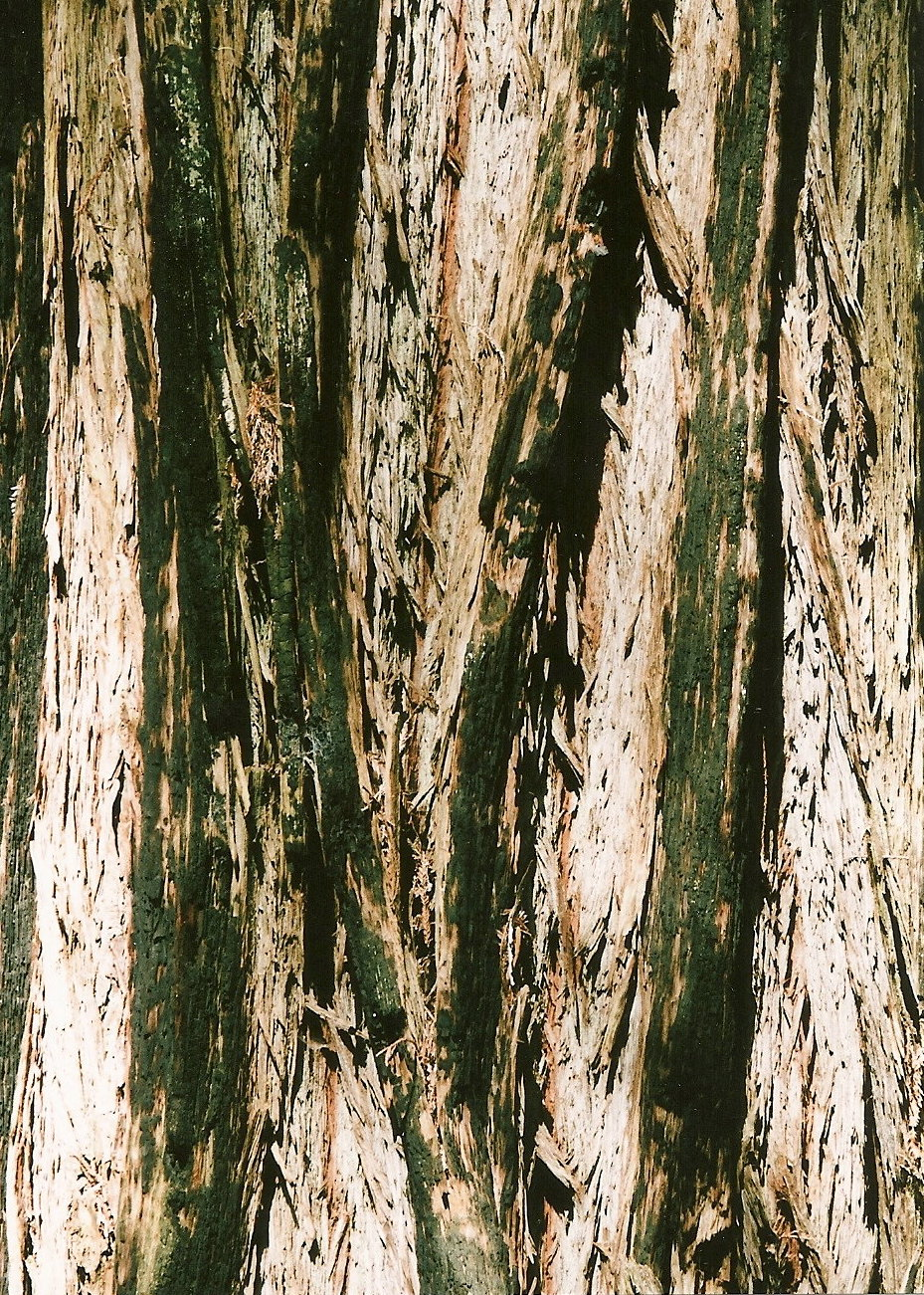I ALSO LOVE THE DESIGNS ON THE BARK