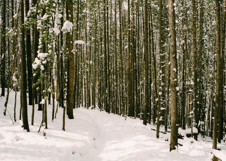 SNOWY WOODS MONTANA