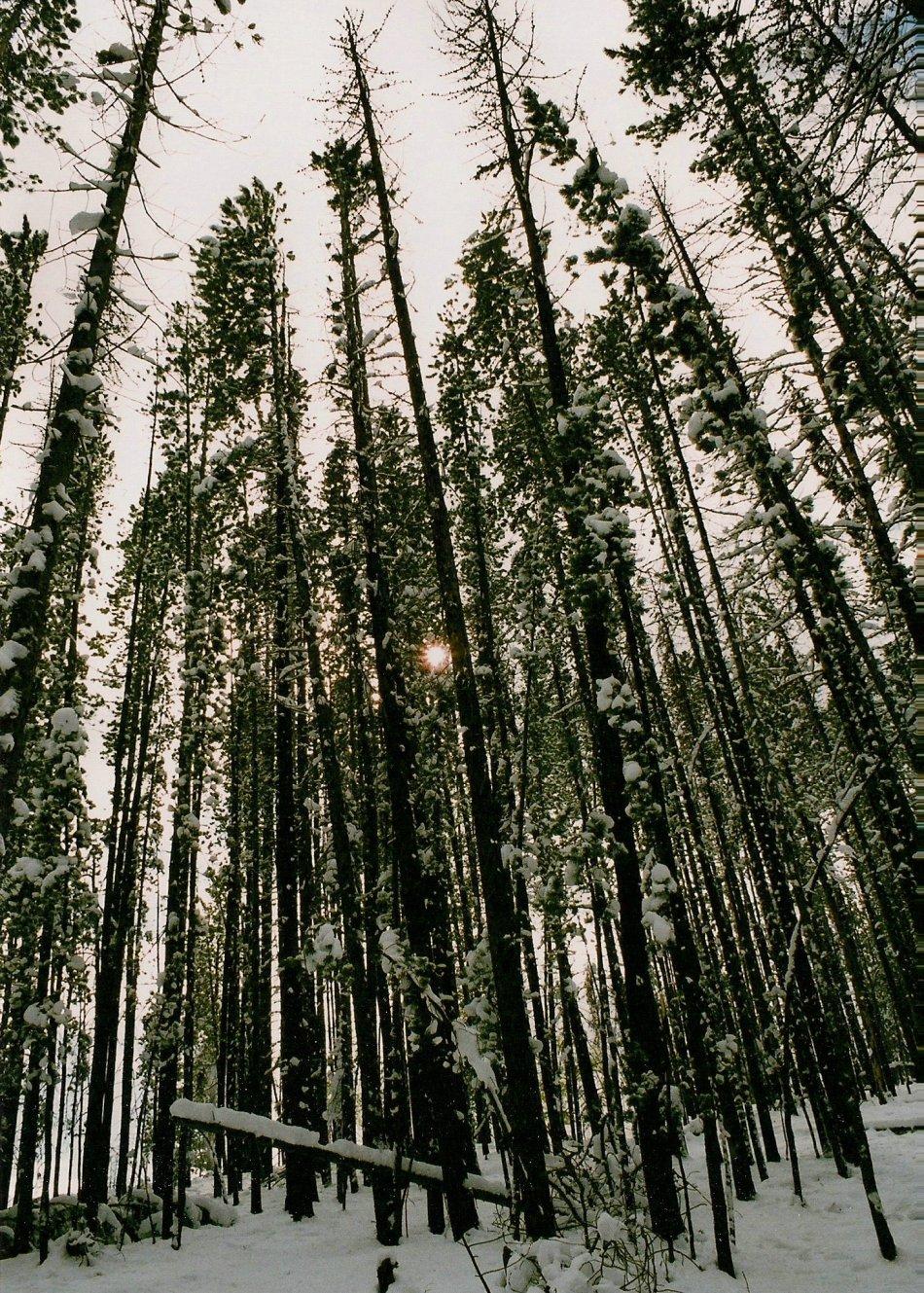SNOWY WOODS MONTANA2