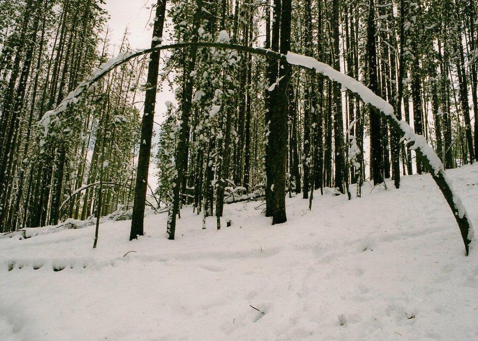 SNOWY WOODS MONTANA 4