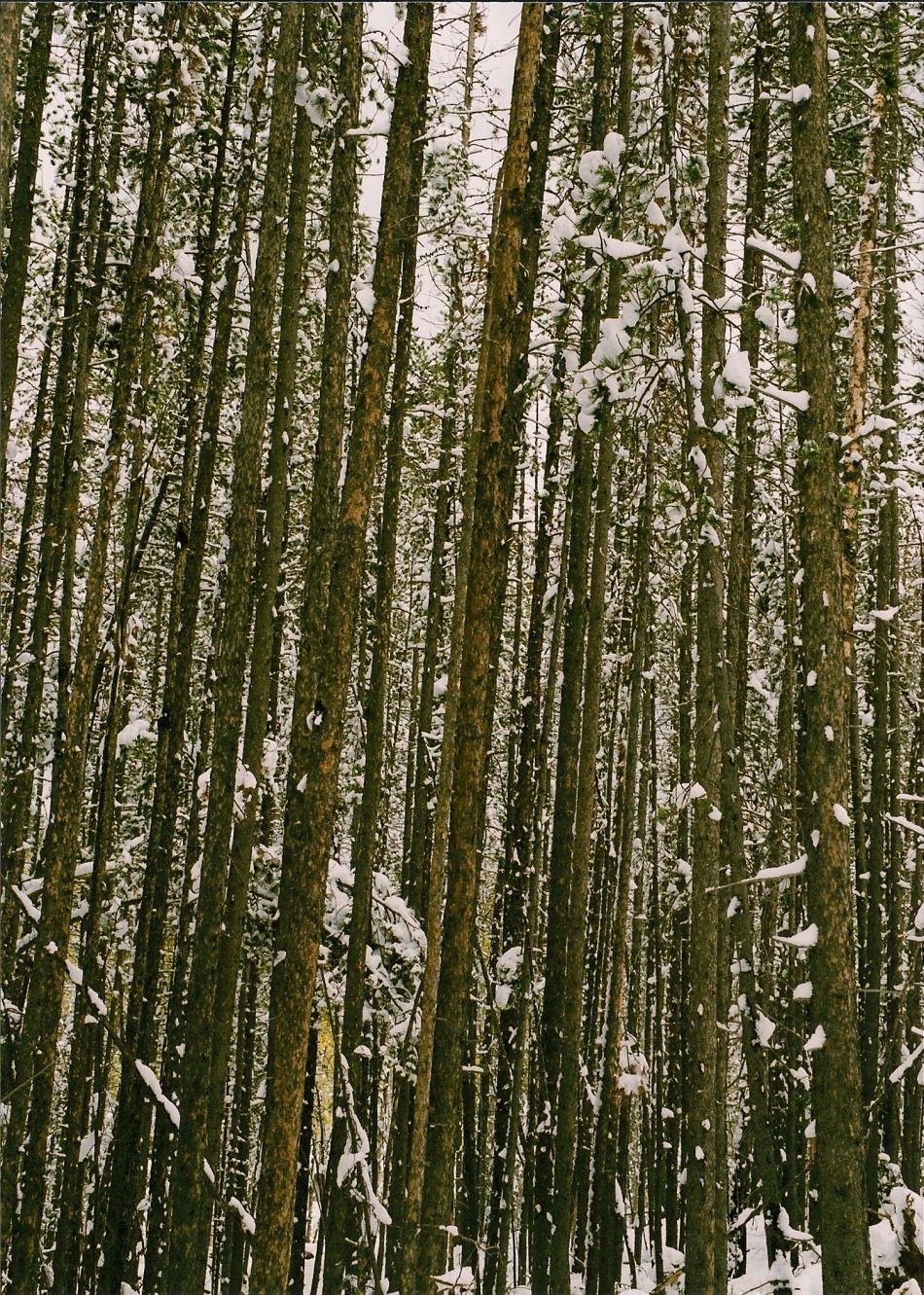 SNOWY WOODS MONTANA 5